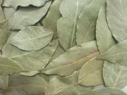 Лавровый лист и Пряности семена