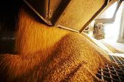 Закупаем на постоянной основе Пшеницу,  Ячмень 150у.е.