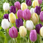 Продажа тюльпанов оптом к 8 марта