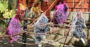 Сетка для защиты винограда от птиц и ос. kazlouskaya_v@interlok.by