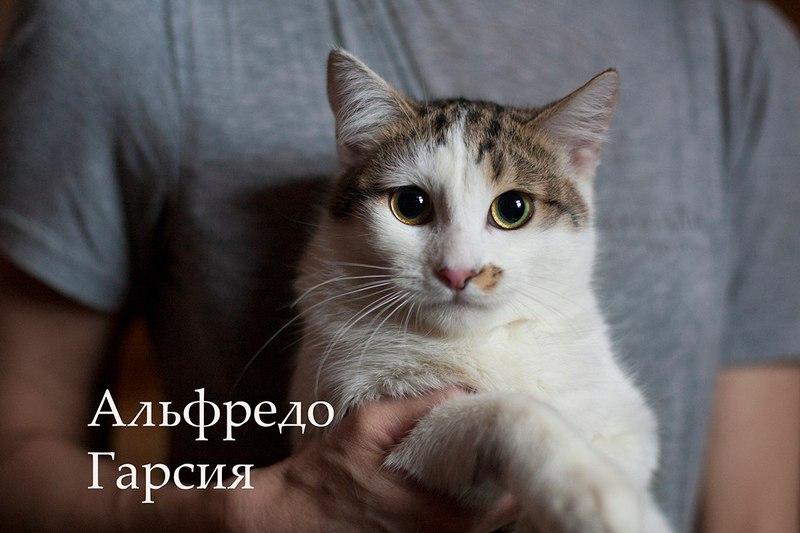 Дома для котов в гродно
