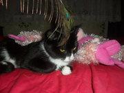 Кошечка (девочка) шустрая