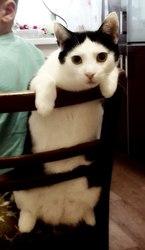 Ищет дом замечательный молодой кот Феникс!!!