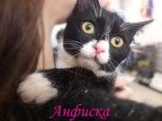 Отдается черный котенок в хорошие руки