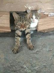 Котята СРОЧНО ищу ДОМ!   Пожалуйста,  помогите пристроить котиков...  У