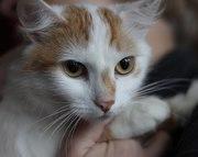 Вы мечтаете о кошке,  но беспокоитесь о порядке в доме? Эта кошка именн