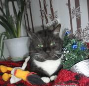 Позитивный добрячок. Кот из мультика - большой и жирный толстичек