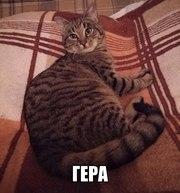 Ласковый котенок-подросток Гера ищет дом. Гере около 6 мес. Уже кастри