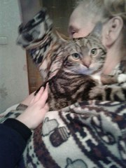 В твответственные руки арбузовый котёнок. Возраст 6 месяцев. Игривый,