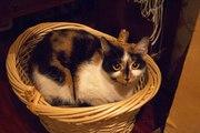 ЗИТА – магическая трёхцветная кошка с глазами как две луны.