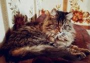 Красавица Миша ищет дом!  Самая крутая кошка на свете открывает ваканс