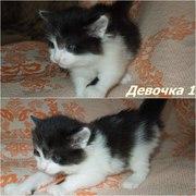 Котята ищут ДОМ!  4 миленьких комочка очень хотят обрести таких же мил