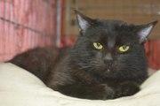 Красивый черный кот - Уголек ищет ДОМ!