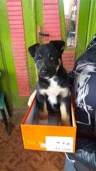 Срочно нужен дом или передержка щенку!!!!!  Мальчик,  около 2 мес,  выра