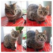 Кошка- подросток,  около 8 месяцев,  была выброшен