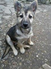 На остановке в районе Девятовки найден щенок,  игривая и весёлая девочк