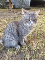 Невероятно хорошенький котик Мишка ищет заботливые ручки и уютный дом!