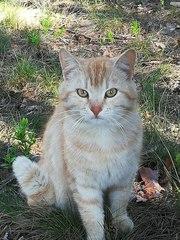 Ищем ПЕРЕДЕРЖКУ или сразу ДОМ  Молодой котик,  возраст примерно 1, 5 год