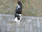 Молоденькая кошечка осталась без дома.