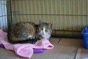 Ласковая замурррчательная кошечка ищет дом!