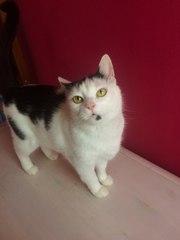 Красивая кошка срочно ищет дом!