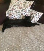 Чёрная кошечка очень хочет домой!