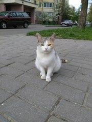 Молоденькая кошка Мая в поисках дома Красавица Мая - обладательница ре