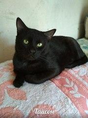 Кот Тайсон ищет ДОМ!
