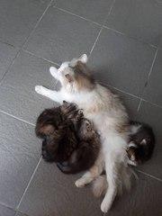Котята в хорошие руки. Им 1 мес. Кушают уже сами. 2 мальчика и 2 девоч