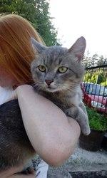 В хорошие руки шикарный,  крупный кот- настоящий мачо,  2 года,  светло-п