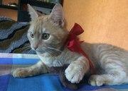 Ищем заботливых,  ответственных хозяев для молодого ласкового котика. Е