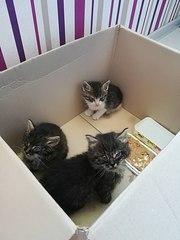 Ищут ДОМ или ПЕРЕДЕРЖКУ котята!  Трое малышей были найдены в подвале.
