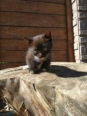 Срочно ищут дом малыши!!!!!! кошка привела на дачах,  женщина очень пер