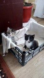 Ищут дом котята!  Котята 3 недели,  трехмастная кошечка и черненький с
