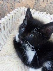 Очаровательная котодевочка ищет надёжный ДОМ!  Котёнок - девочка,  1, 5