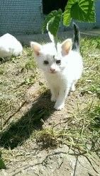 В одном из дворов на Фолюше кошка привела котят,  два мальчика. Им прим