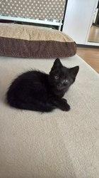 Срочно!!! Нужна передержка или дом для котенка около 1, 5 месяцев. У ма