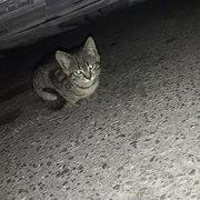Отдам котенка в добрые руки (мальчик)нашли на парковке,  здоров,  привит