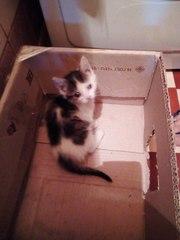очаровательные КОТЯТА в добрые руки  Ищут дом два котёнка (мальчик и д