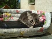 СРОЧНО! Новая кошка с котятами в САХе!  Красивая кошечка в черной шубк