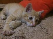 Срочно!!! Котёнок в добрые руки. У ветеринара были полностью здоров,  п