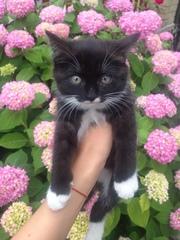 Славные котята ( 2 девочки),  1, 5 месяца. Здоровы,  активны,  все кушают