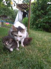 Прибилась кошка с маленьким котенком(примерно месяц). Кошка пушистая,
