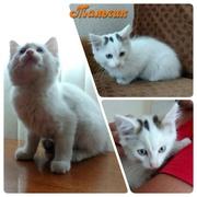 ВСЕМ ПРИВЕТ!!!  Маленькие,  белые котята (кот и кошка) ищут хозяев с бе