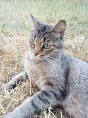 Красавица кошка ищет ДОМ!  Молодая кошечка ,  1, 5 года,  очень красивого