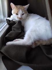 Необыкновенный ласкуша и добряк годовалый коток Лёвушка в такие же,  ка