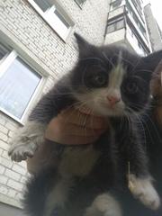 Котята нуждаются в доме или передержке. Соседи крайне недовольны их по