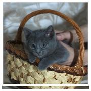 Друзья,  нужен дом или передержка котенку,  возраст полтора месяца,  дево