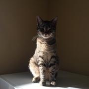 Ищет добрую душу и хорошие руки котик по кличке Шер.