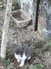 Котята ищут ДОМ!  Красивого окраса ,  около двух месяцев. Мальчик и дев
